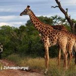 Pigūs bilietai į Johanesburgą, Pietų Afrikos Respubliką, iš Stokholmo – tik nuo 348 EUR!