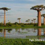 Nerealu! Pigūs bilietai į Madagaskaro salą iš įvairių Europos miestų – vos nuo 265 EUR į abi puses!