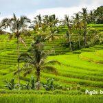 Neblogai! Pigūs bilietai iš Londono į Balio salą – tik 406 EUR į abi puses! Galimas išvykimas ir per Šv.Kalėdas!